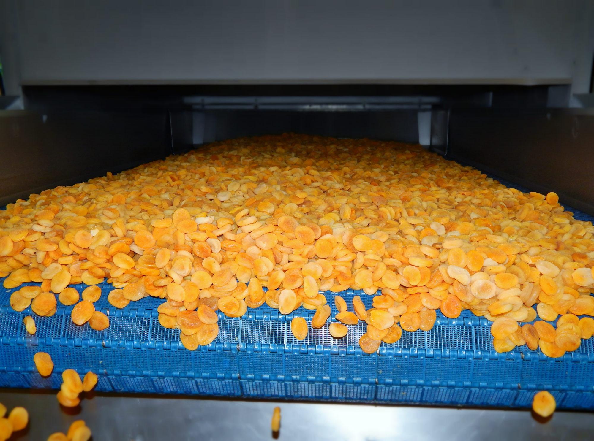 Fin de réhydratation des abricots