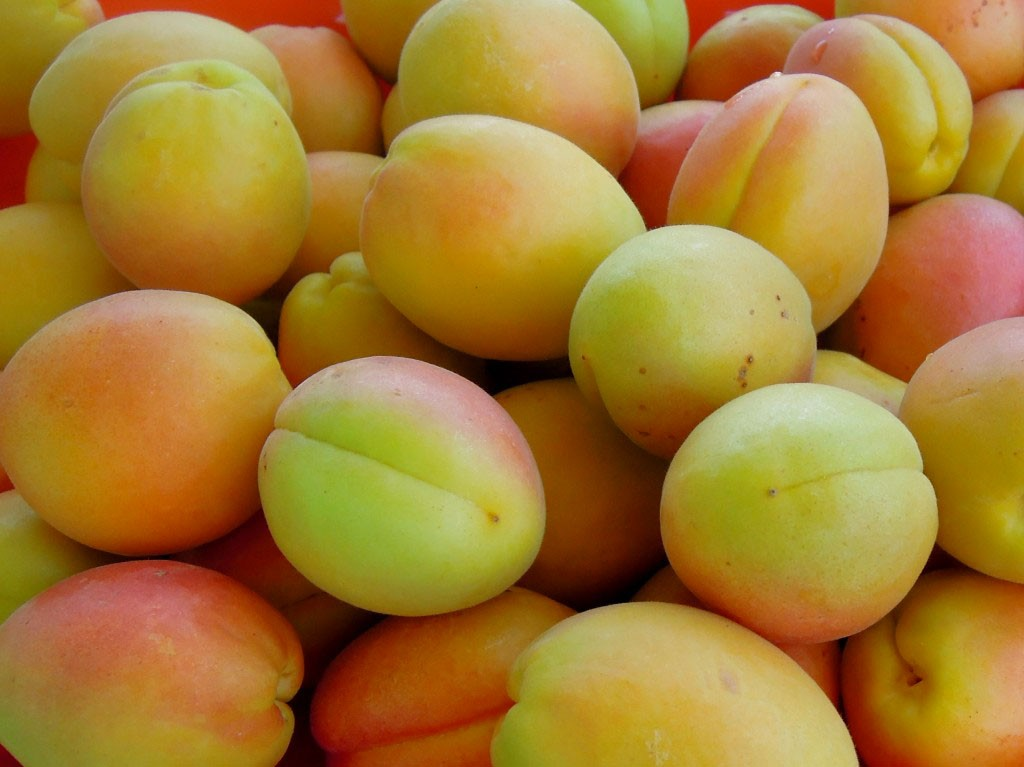 nombreux abricots