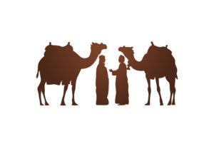 chameliers et chameaux